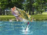 Lake fishing lotus lake